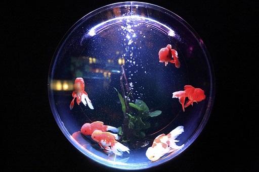על דגים, פילוסופים ומציאות