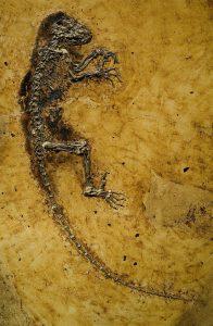 אידה, אבי הפרימטים, לפני 47 מיליון שנה